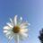 Небо і польові квіти